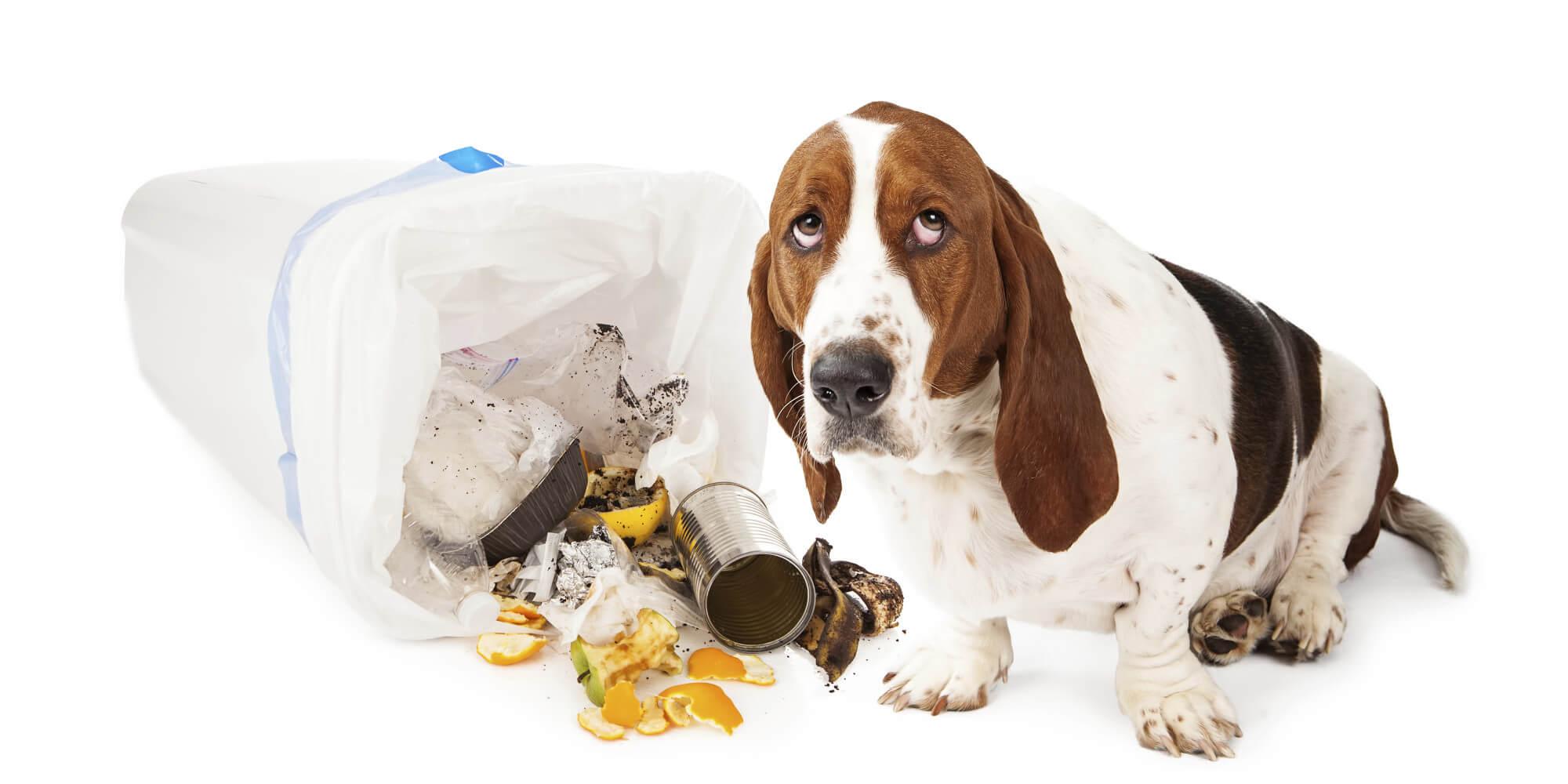 7 dicas para evitar perigos relacionados com animais de estimação