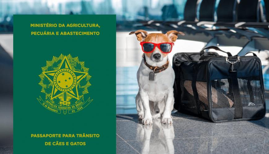 No Dia do Turismo saiba como tirar o passaporte do seu pet?