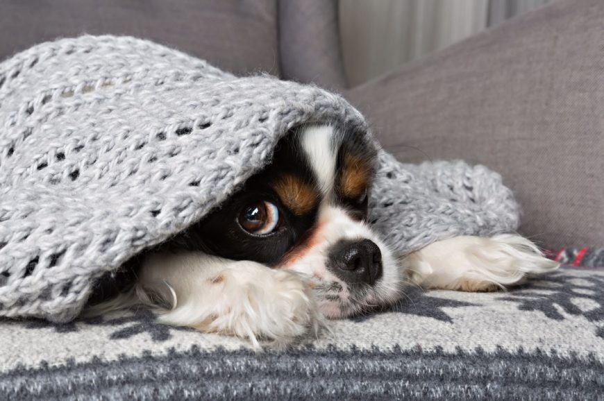 Seus pets também sentem frio!