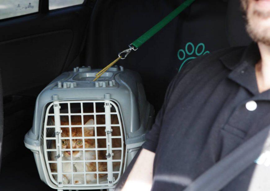 😻🚘🐶 Transporte seu pet em segurança com a PetDriver