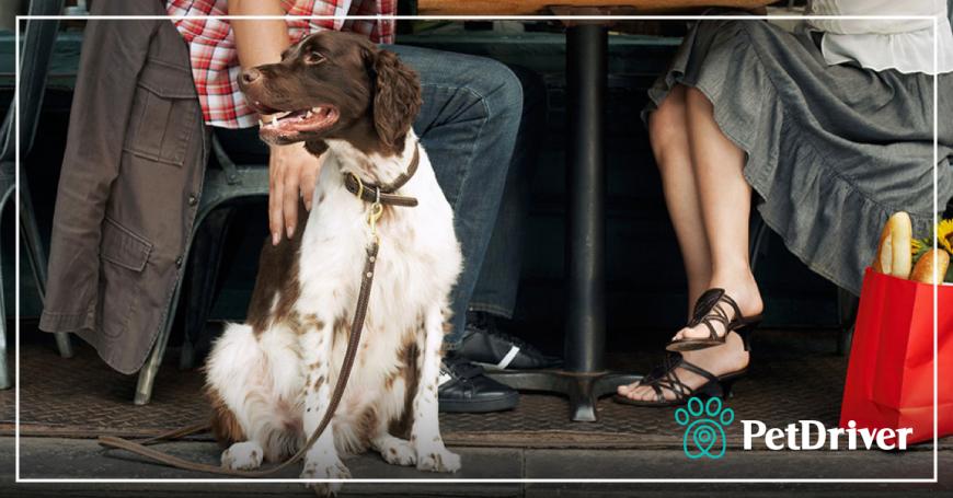 Experimente ir de PetDriver, seu aplicativo de transporte de animais domésticos!