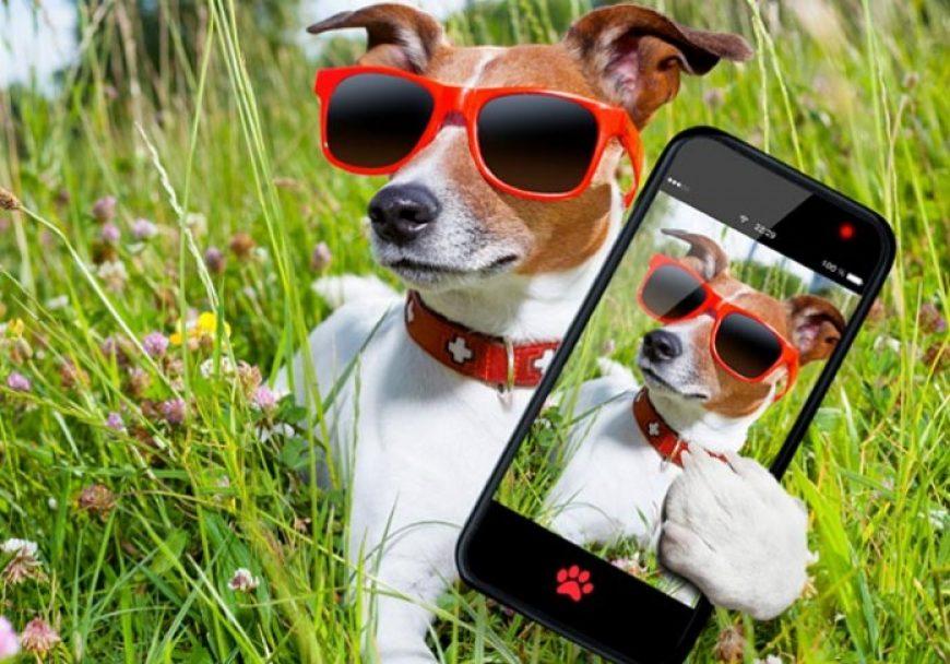 Como tirar uma selfie perfeita com seu cachorro?