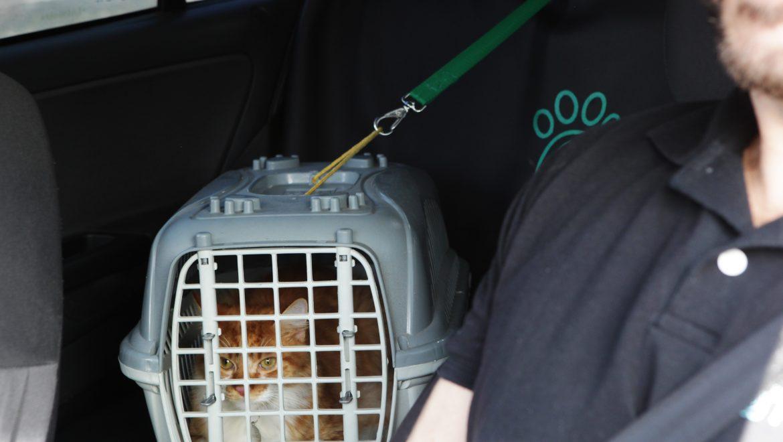 Como levar seu gato para uma viagem de carro? Confira os cuidados!