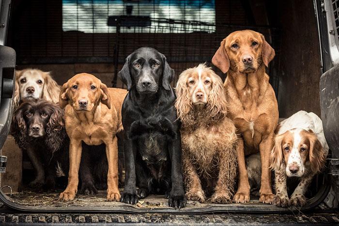 As melhores fotos de cachorros de 2018