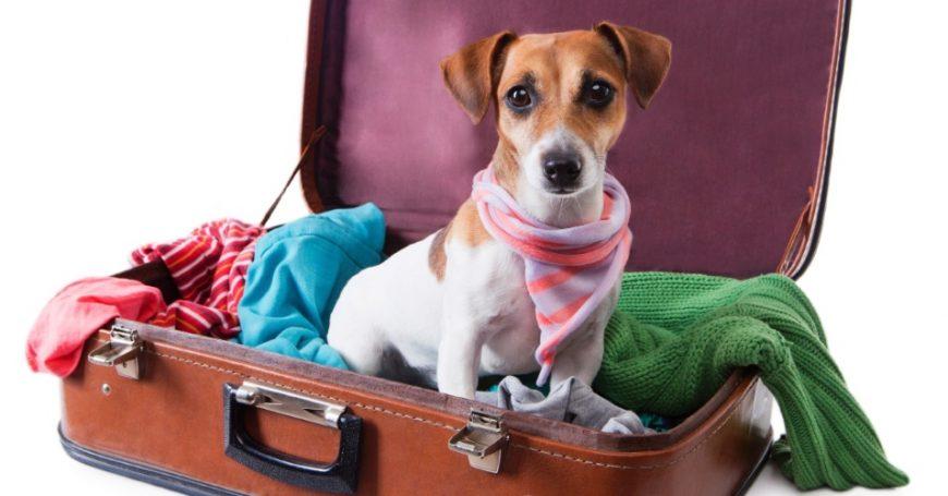 5 coisas que você deve procurar em um hotel em viagens com cachorro