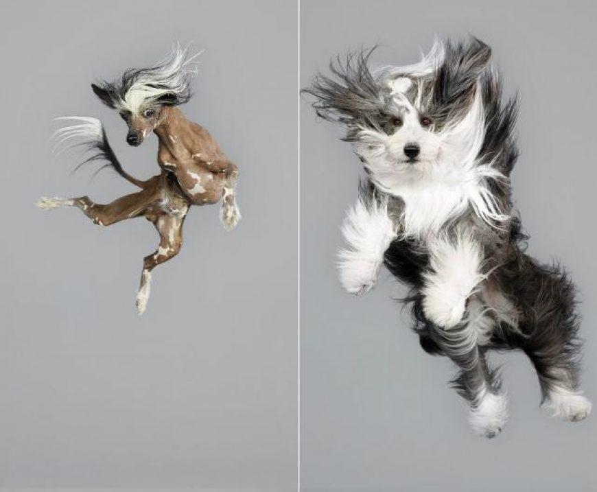 Dicas de como fazer seu cão parar de pular!