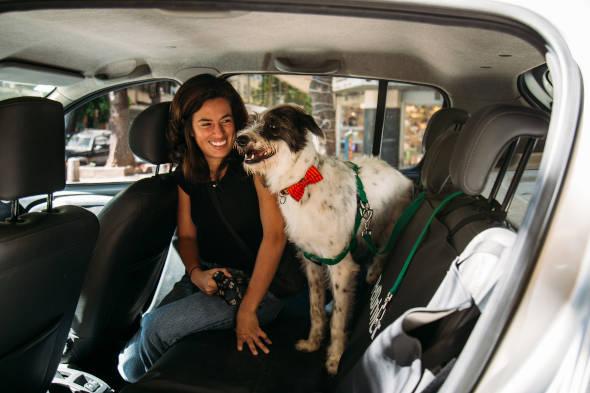 Como escolher um serviço profissional para transportar seu pet?