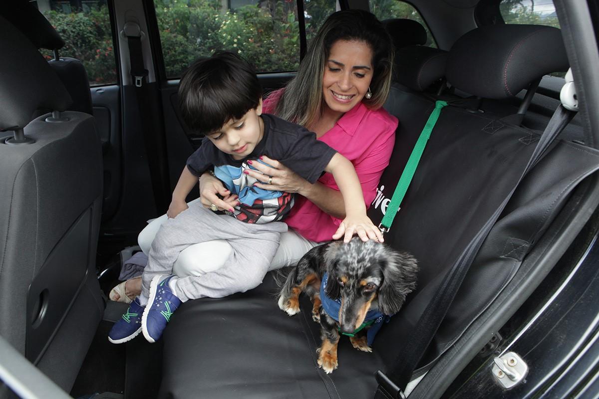 Transporte pet: por que escolher a PetDriver quando for sair com o seu cão ou gato?