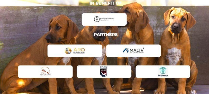 A PetDriver agora é parceira ARD Foundation!