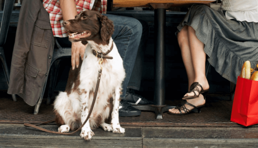 Você gosta de ficar trancada(o) em casa? Seu Pet também não! Dicas de lugares pet friendly no RJ.