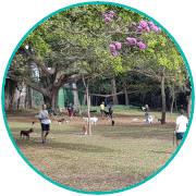 PETDRIVER-parque-ibirapuera-2