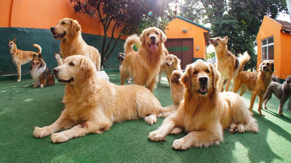 Dicas de Hotéis e Day Care para Pets em São Paulo!
