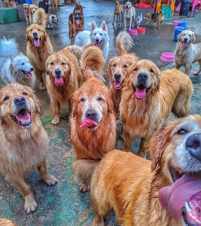 planet-dog-resort