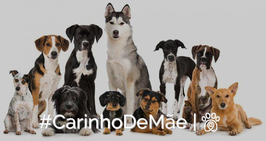 Mãe, não sabe que nome dar ao novo cachorrinho? Conheça alguns nomes criativos de cães!