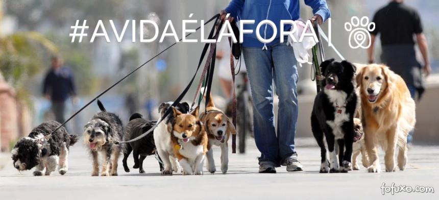 Dicas e cuidados para um bom passeio com seu cão!