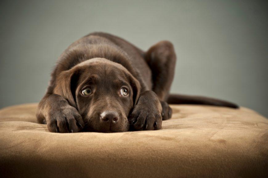 No Dia da Coragem está faltando coragem para seu cão? Saiba identificar cães medrosos!