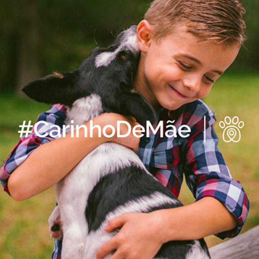 Mãe, se você pensa em dar um cão para seu filho, leia esse artigo!