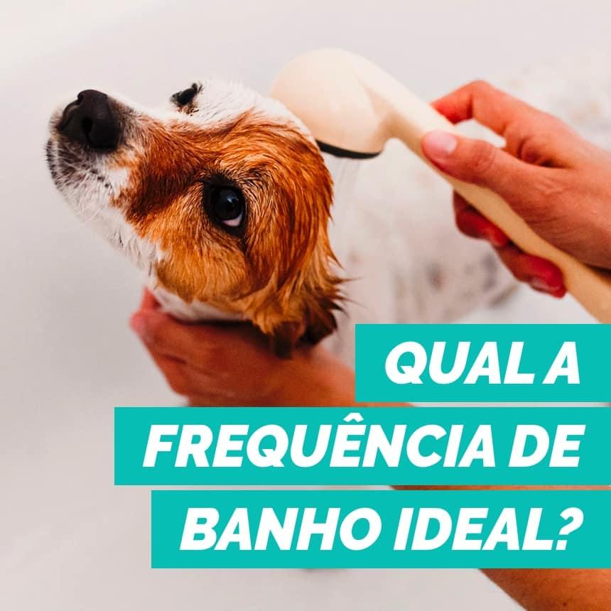 Com qual frequência devo dar banho no meu cachorro?