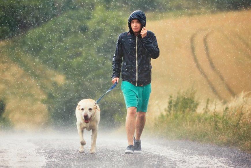 Os perigos da chuva para o seu cachorro!