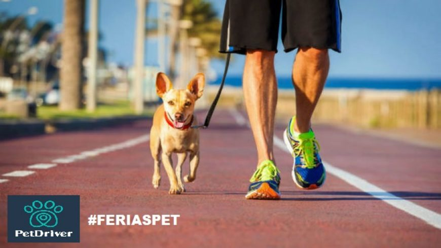 Dicas de atividades para as férias com seu cãozinho!