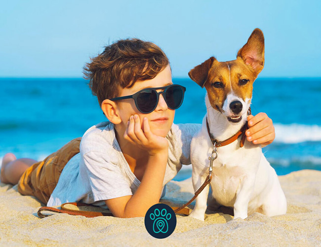 No Rio, seu cachorro pode curtir a praia junto com você