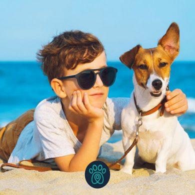 Cachorros e tutores podem pegar praia juntos no Rio