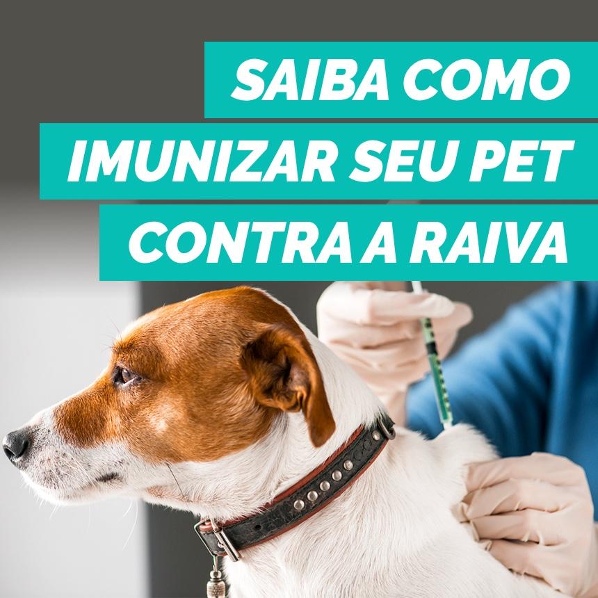 Saiba como imunizar seu pet contra a raiva e a importância da vacinação