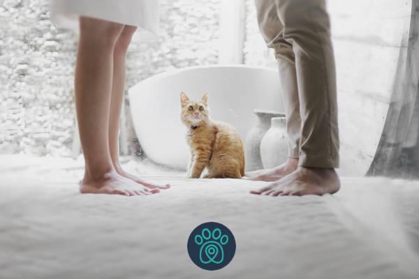 """Afinal o que é o famoso """"banho de gato""""?"""