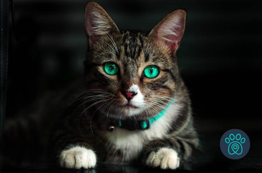 Setembro é mês da Mania de Gato na PetDriver!