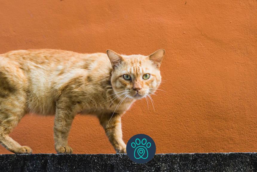 No dia da independência, descubra porque os gatos são tão independentes!