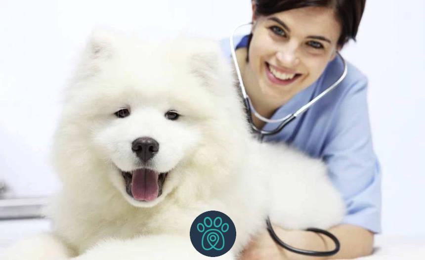 PETDRIVER_72301379-vétérinaire-examiner-vétérinaire-chien-table-vétérinaire-clinique_blog