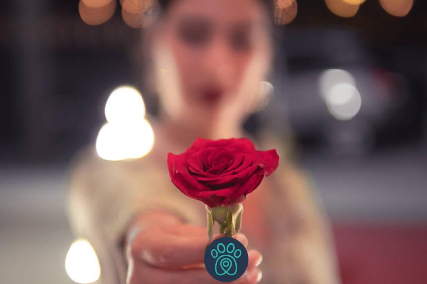 PETDRIVER_blurred-background-close-up-flower-1324995__blog