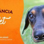 PETDRIVER_evento-Estancia-Pet-6Edicao_5