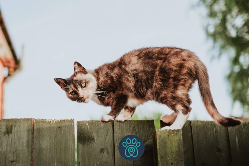 Gato escaldado, pode ser sinal de que algo está errado!