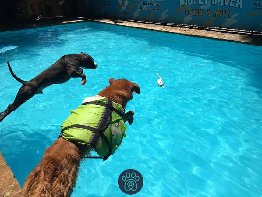 Natação exercita e melhora respiração dos cães