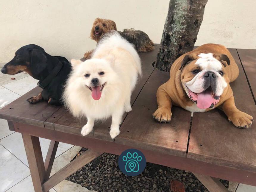 A Petdriver e o Club Pet se uniram para oferecer um serviço ainda melhor aos tutores de pets!