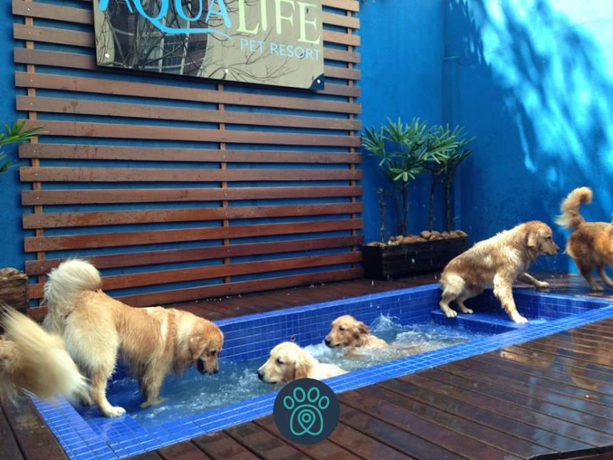 Aqualife Pet Resort oferece conforto e segurança aos animais em SP