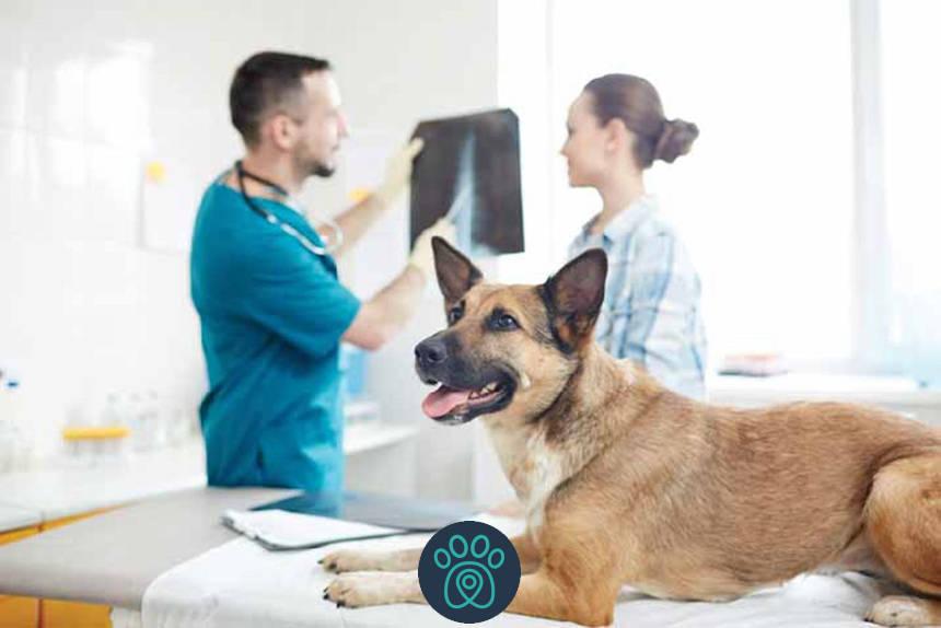 Fisioterapia Veterinária – Avanços da Veterinária no Brasil