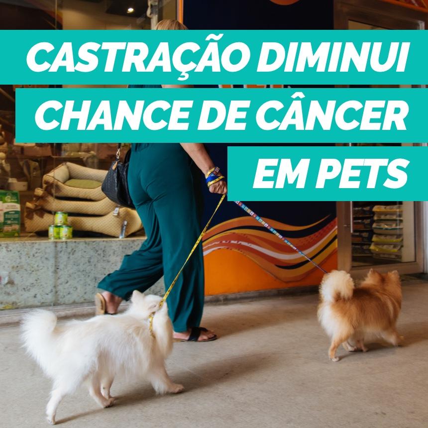Castrar os pets ajuda na prevenção do câncer de mama nas fêmeas