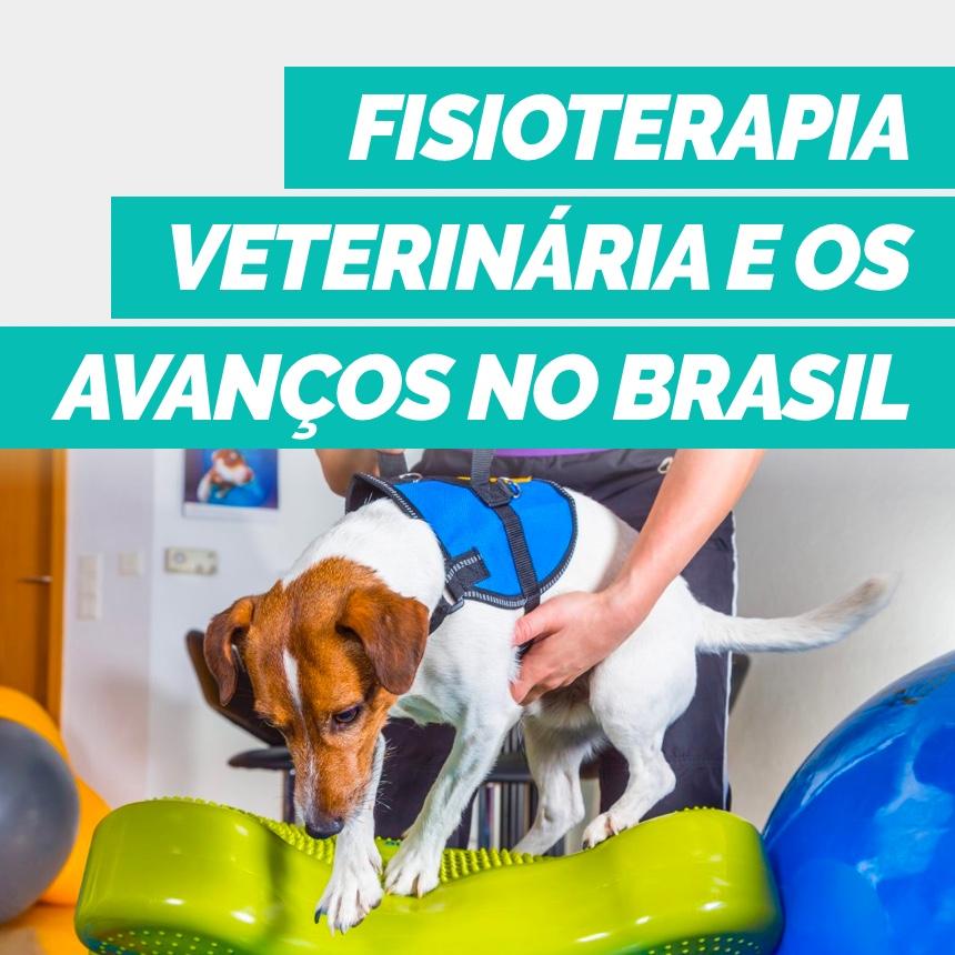 Conheça os benefícios da fisioterapia veterinária para a saúde dos animais