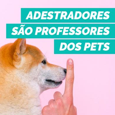 Adestradores são os professores dos pets, veja quando chamar um profissional para te ajudar