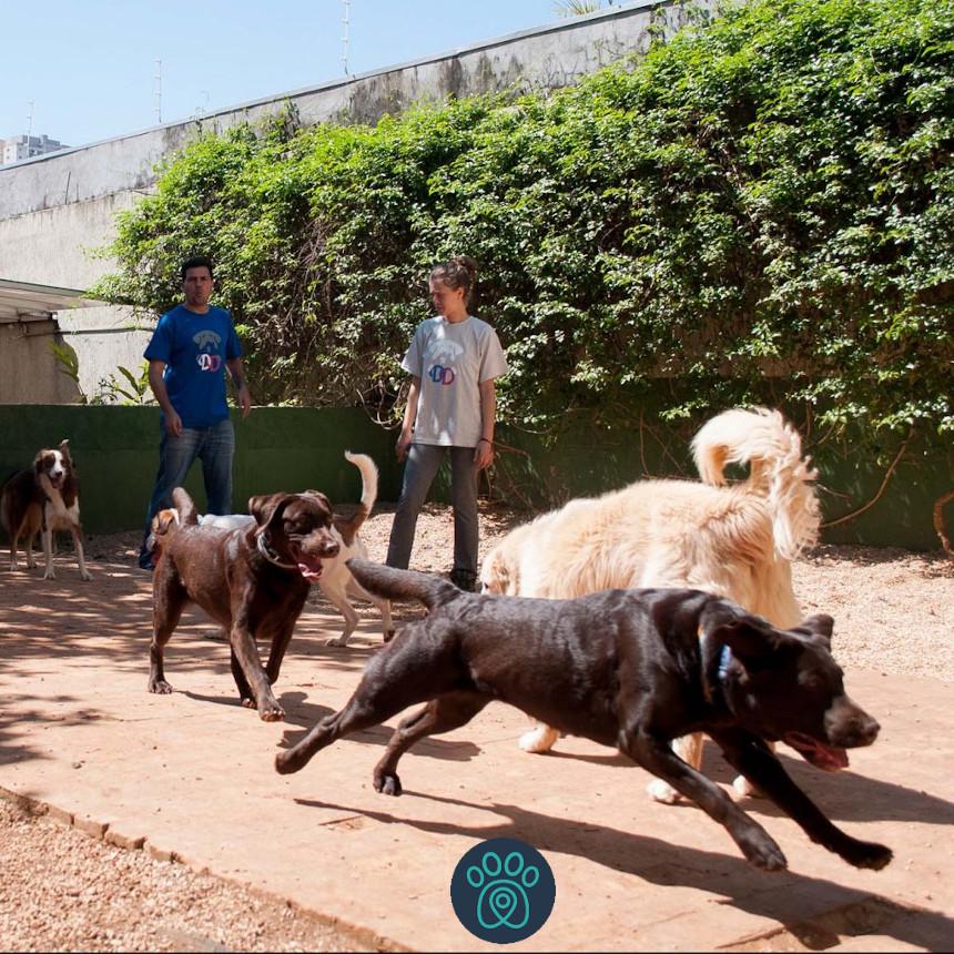 Parceria: DayDog, em São Paulo, conta com frota da Petdriver