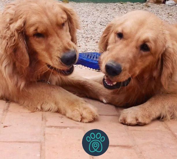 PETDRIVER_corporativa-dogday(02)