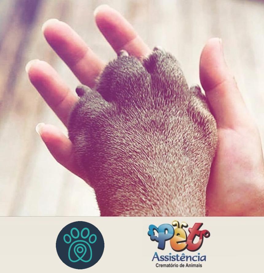 PETDRIVER_pet-assistencia2019-11-03(02)