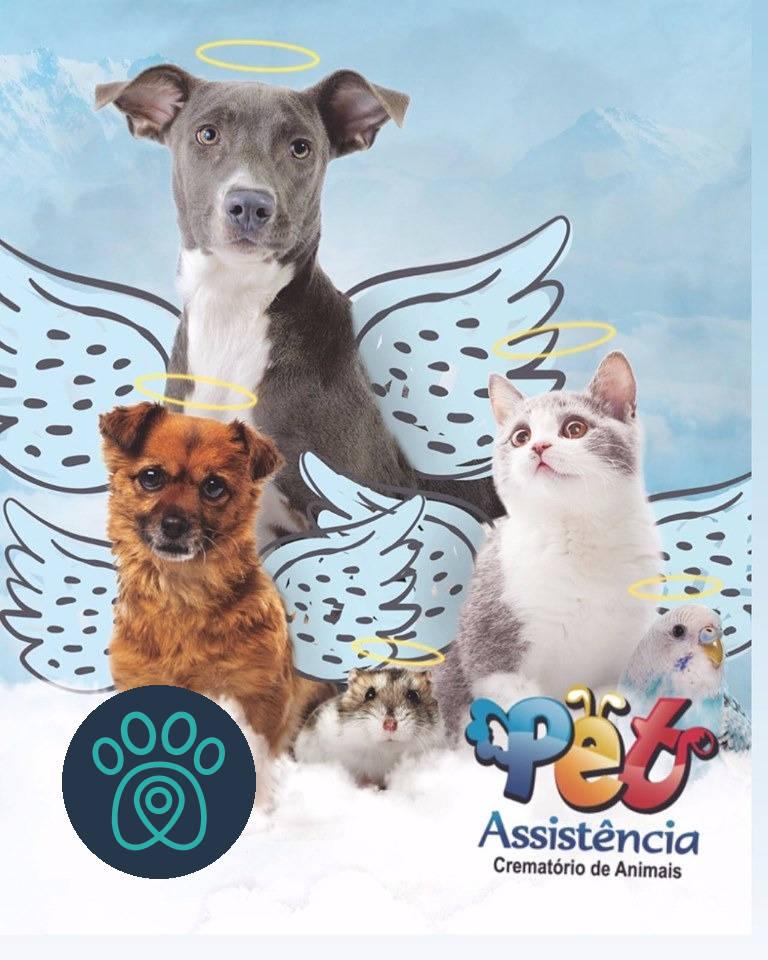 PETDRIVER_pet-assistencia_2019-11-03(03)