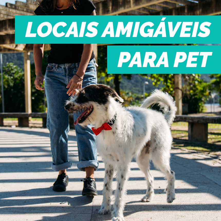 Conheça locais pet friendly no Rio de Janeiro para você frequentar com o seu cão