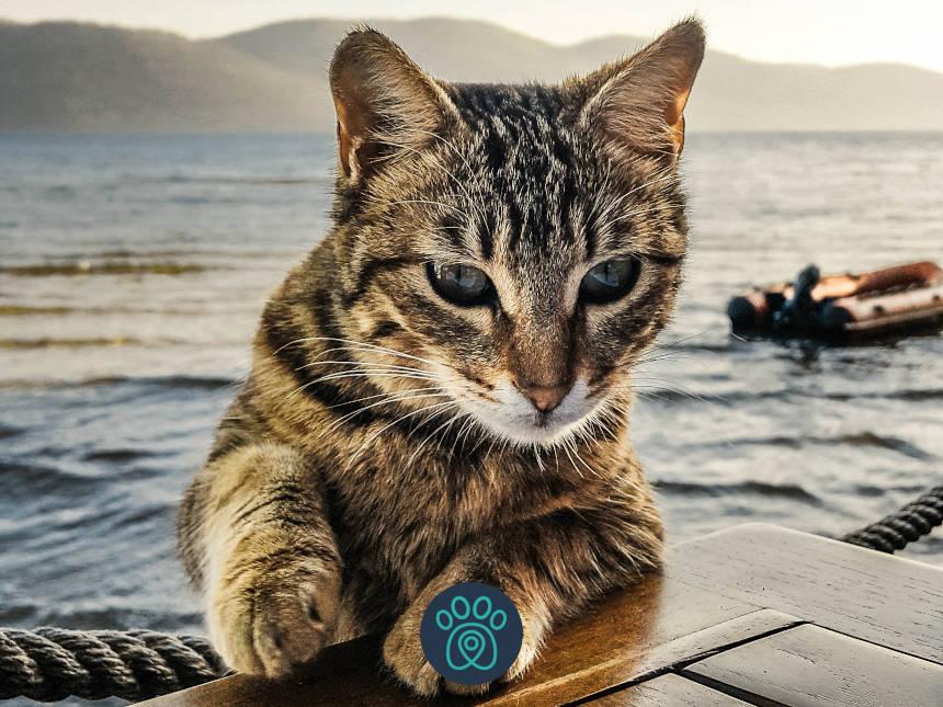 PETDRIVER_cat-68594