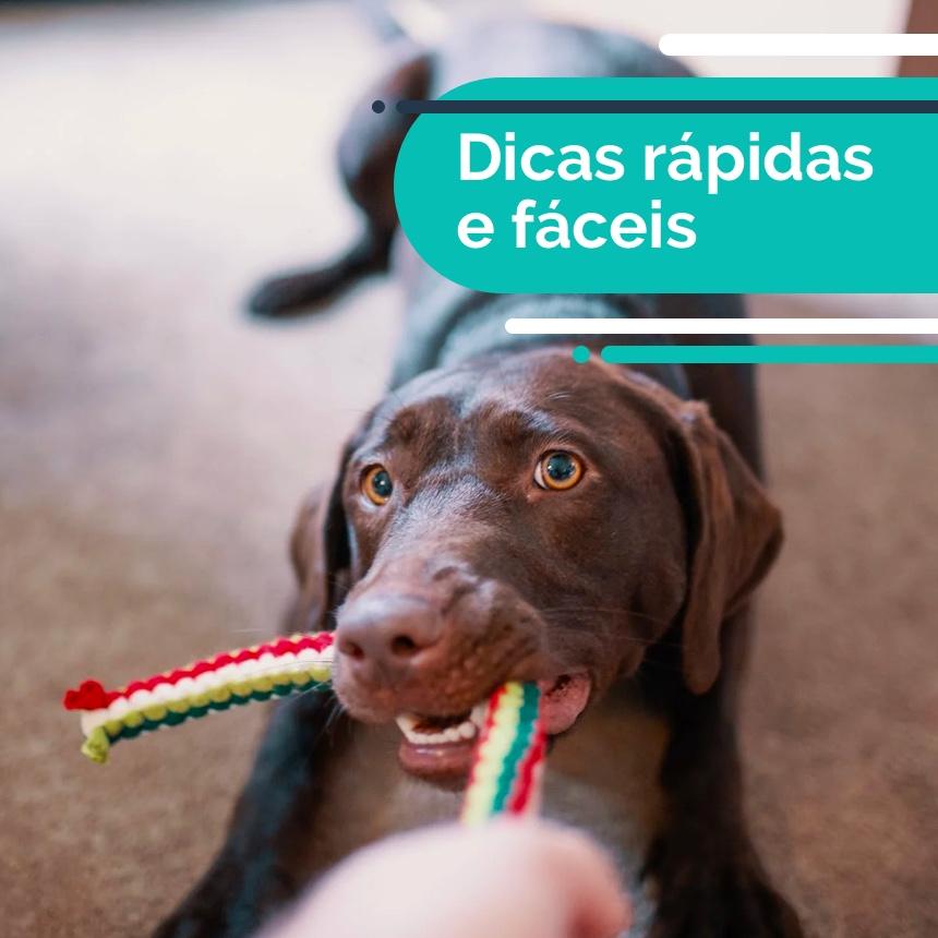Aprenda a criar um brinquedo que irá entreter e estimular a inteligência do seu cão