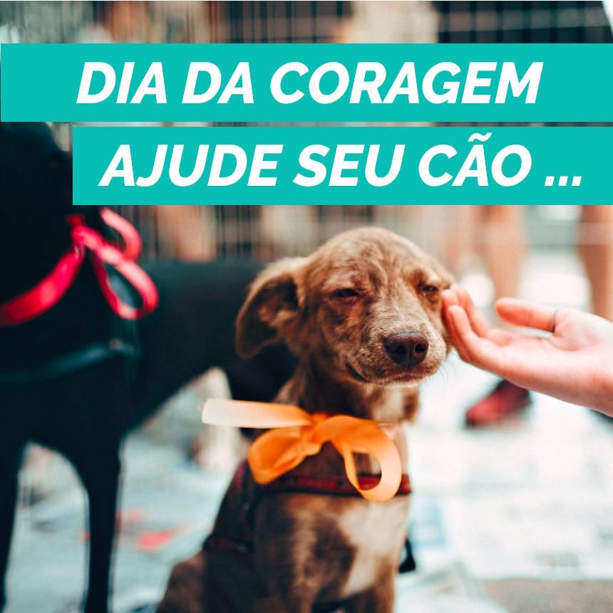 Dia da Coragem: ajude seu cachorro a perder o medo e a viver melhor