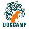 PETDRIVER_dogcamp_100